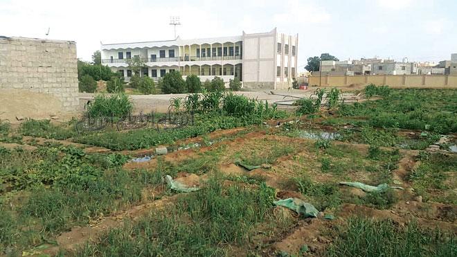 عميد كلية ناصر للزراعة: الكلية تعرضت لنهب كبير بعد الحرب