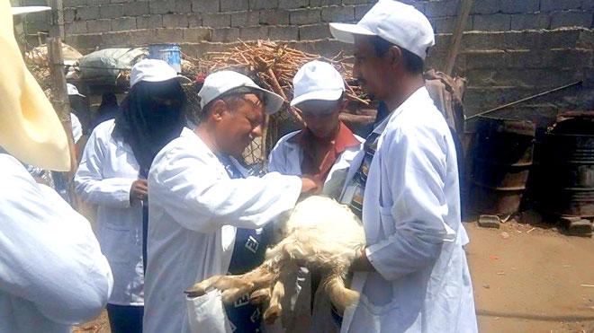 فريق بيطري يعاين المواشي الموبوءة في صلاح الدين